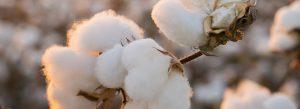 wasmachine tips om duurzaam je kleding wassen met biologisch of ecologisch wasmiddel katoen